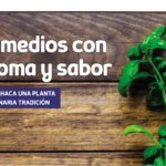 La Albahaca una planta de milenaria tradición – Remedios de mi pueblo